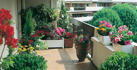 alberelli da terrazzo tutti i tipi di piante tappezzanti per il tuo balcone