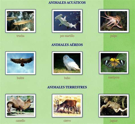 100 ejemplos de animales terrestres y acuticos nombres de animales terrestres acuaticos y aereos imagui