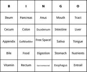 human digestion bingo by bingo card template