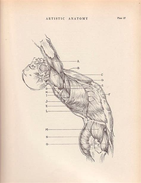 vintage diagram vintage print human trunk diagram 9 x 12