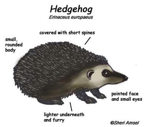 porcupine diagram hedgehog diagram