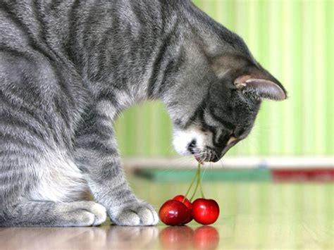 alimentazione gatto frutta e verdura alimentazione gatto
