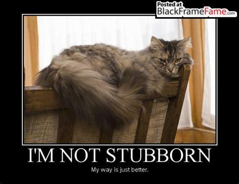 Stubborn Memes - stubborn memes image memes at relatably com