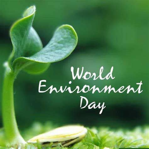 day images world environment day pictures images graphics for