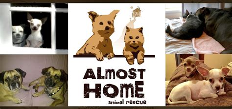 almost home animal rescue 28 images dogs available for