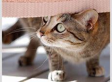 Macskás képek :: A Macskámról Freemail