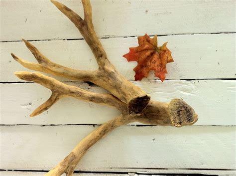 deer antlers diy save a deer a pb antler inspired tutorial