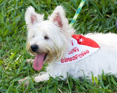 places that allow dogs 10 pet friendly places in singapore to bring your dogs