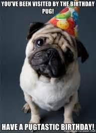 Birthday Pug Meme - best 25 happy birthday pug ideas on pinterest pug