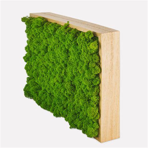 cornice per quadro quadro in lichene cornice legno abito verde