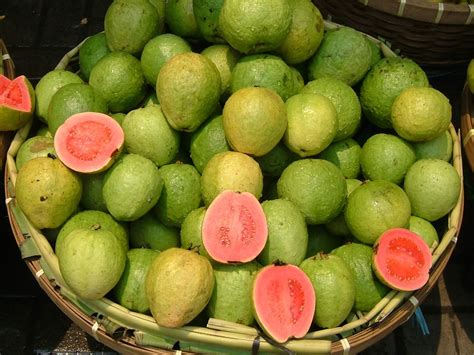 Curry Leaf Plant Diseases - guava wikipedia
