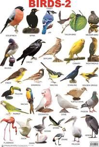 birds names 100 more photos