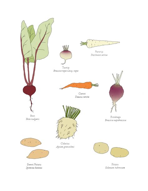 vegetables with roots shop at johannak