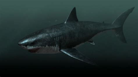 submarino el tiburn asesino megalodon is it possible that this nearly 67 foot shark