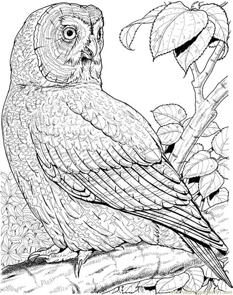 hard coloring pages of owls free coloring pages of owl hard