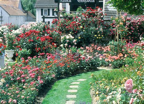 Rosengarten Gestalten by Rosenbeete Gestalten Rosenbeete Gestalten Pink