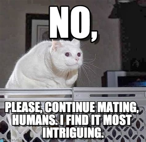 Meme Please - no please cat meme cat planet cat planet