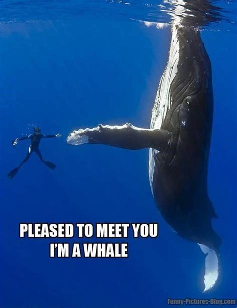 Oh Whale Meme - weekend aquarium meme roundup aquanerd