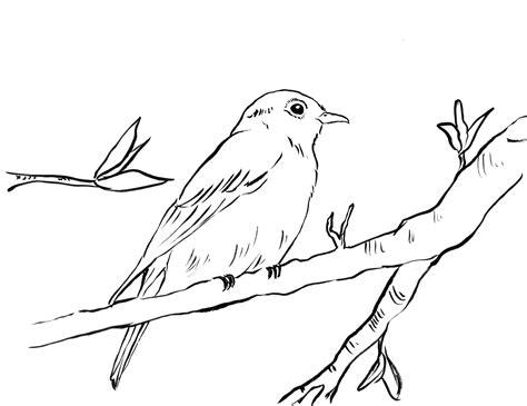 bluebird coloring pages preschool blue bird coloring pages sketch coloring page