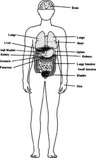 Outline Of The Human Parts by Outline Coloring Pages And Print For Free