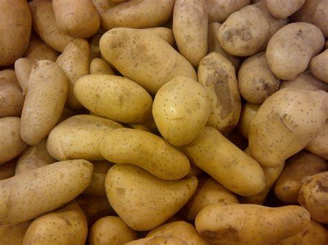 file potato 123 jpg wikimedia commons