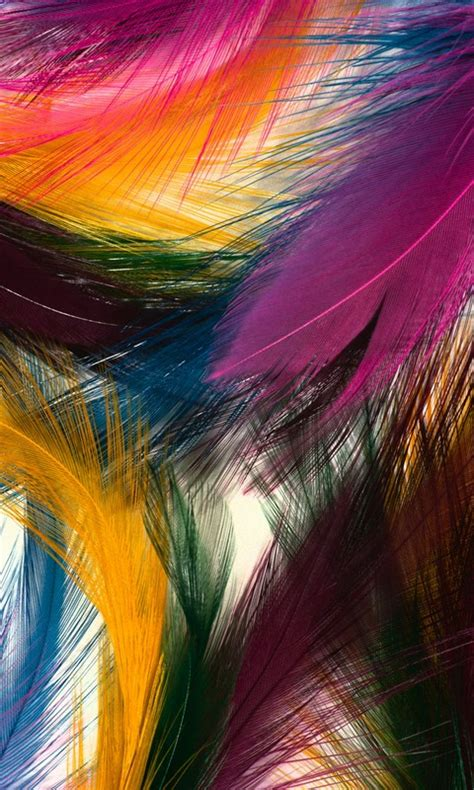 colorful wallpaper for your phone colorful feathers mobile phone wallpaper 480 800 hd