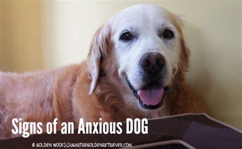 anxious puppy thundershirt anxiety treatment