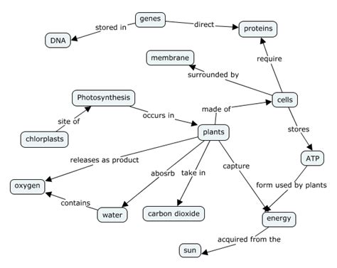 how photosynthesis yields sugar concept map ms falcon s learning website cts 1 photosynthesis