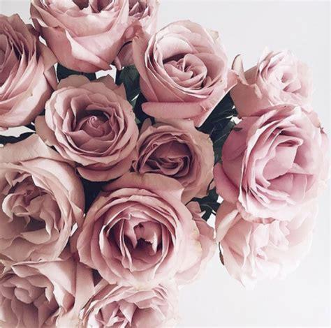 tumblr themes roses blush tumblr