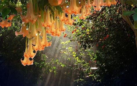 You Are My Sunshine Decorations Hanging Garden How Ornament My Eden