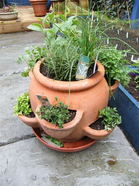 plant pots for sale retford terracotta lacquered plant herbs herb pots and plants on pinterest