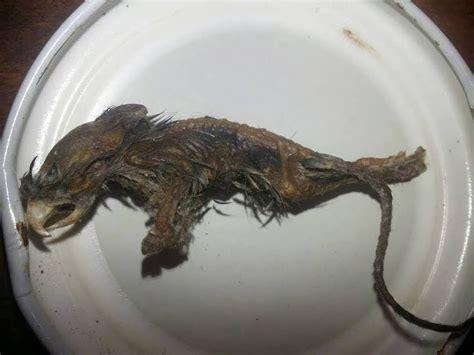 imagenes de criaturas mitologicas reales descubren criatura mitol 243 gica en argentina oxlackcastro