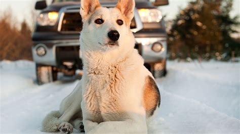 dogs and antifreeze antifreeze danger to pets