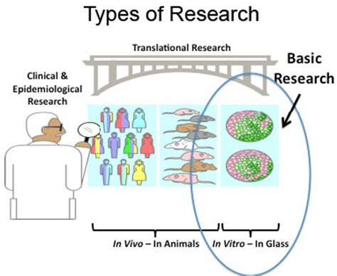 How Do Most Find Out They Cancer Cisn How Cancer Is Studied Basic Research Scientists