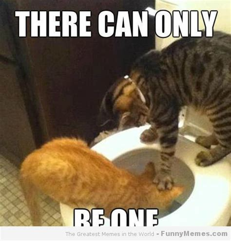 cat and memes there can only cat meme cat planet cat planet