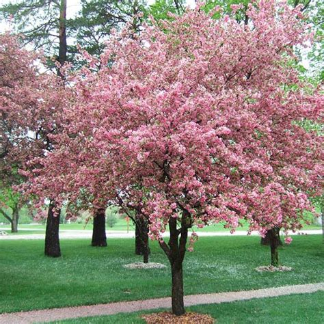 best flowering tree for front yard plant growth secrets front yards backyard and yards