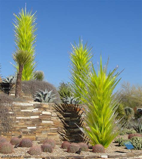 sonoran desert botanical garden tucson garden ftempo