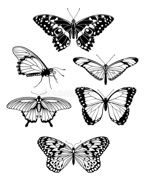 beautiful stylised butterfly outline silhouettes royalty