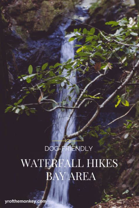 bay area hikes with dogs waterfall hikes with dogs cataract falls marin cascade falls mill valley