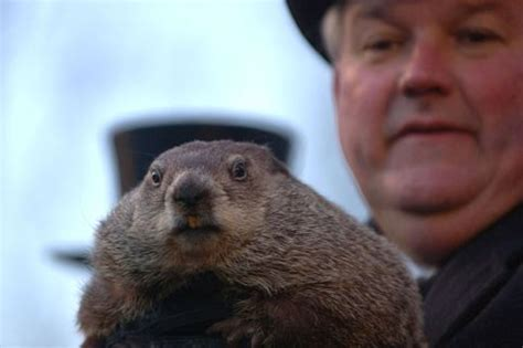 groundhog day driving top 10 facts about groundhog day and there s no bill