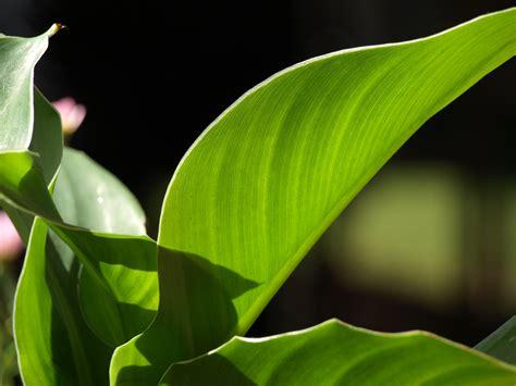 big green leaf by sarahhstarlight on deviantart