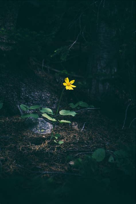 imagenes de flor triste fondo de pantalla de flor amarilla oscuridad soledad