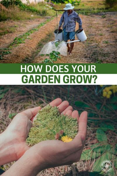 How Does Your Garden Grow by How Does Your Garden Grow Sunlight Water And Some