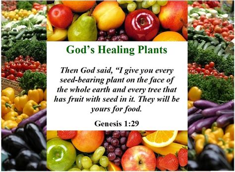 vegetables n the bible about god s healing plants