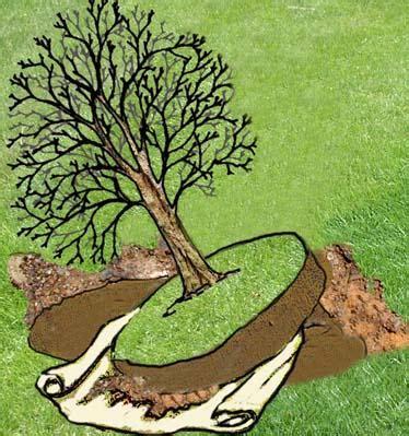 alberi da giardino piccolo a di arbusto o piccolo albero come spostarlo
