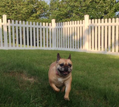 how to keep dog in yard without fence fencing for dogs pool fencing for dogs 100 dog backyard