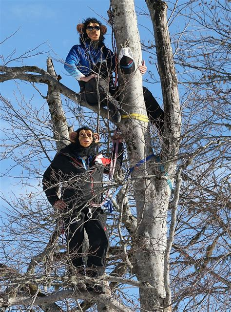 Just Monkeying Around Ski Coaches Hang From Trees Wearing | just monkeying around ski coaches hang from trees wearing