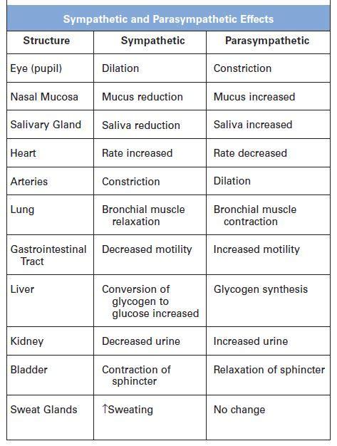 Cranial Nerves Table Sympathetic And Parasympathetic Effects Nurses Tips