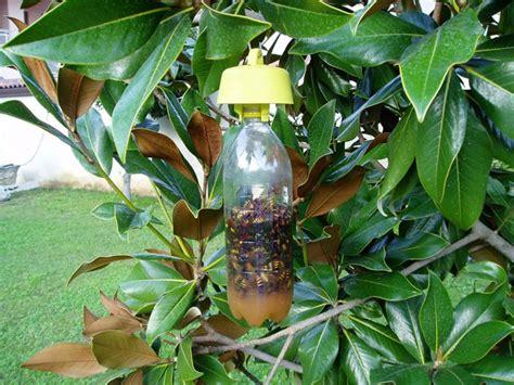 trappole per zanzare giardino rimedi naturali per proteggere l orto come fare orto