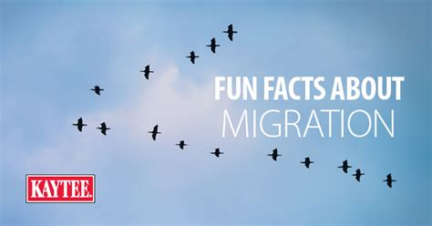 10 fun facts about migrating birds